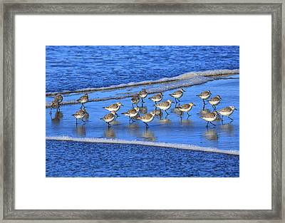 Sandpiper Symmetry Framed Print by Robert Bynum
