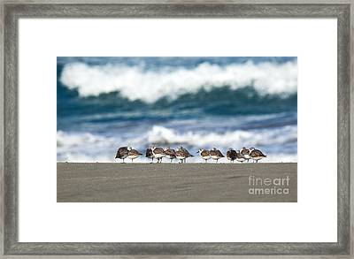 Sandpipers Keeping Warm On A Very Cold Day At The Beach Framed Print by Michelle Wiarda