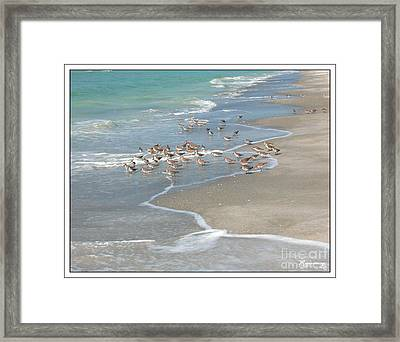 Sandpipers On The Beach Framed Print