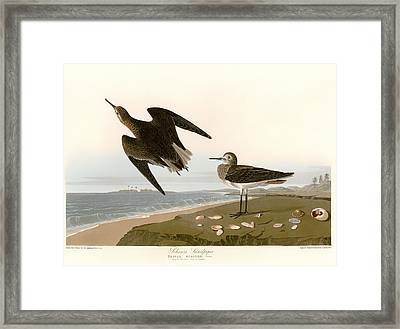 Sandpipers On The East Coast Of Florida Framed Print by Mountain Dreams