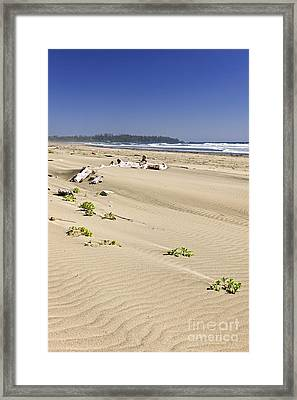 Sandy Beach On Pacific Ocean In Canada Framed Print by Elena Elisseeva