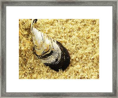 Sandy Framed Print by Christian Rooney