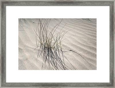 Sandy Grass. Coastal Dunes In Holland Framed Print by Jenny Rainbow