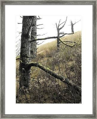 Framed Print featuring the photograph Sandy Hillside by Adria Trail