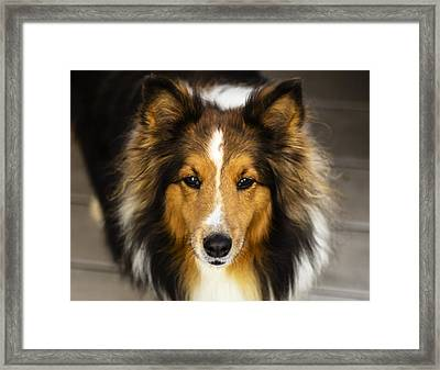 Sandy The Perfect Model Framed Print