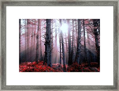 Sanguine Framed Print by Harmony Lawrence