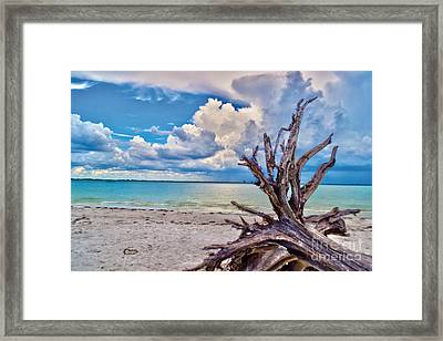 Sanibel Island Driftwood Framed Print