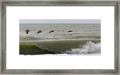 Sanibel Pelicans Framed Print