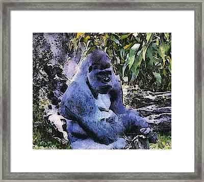 Santa Barbara Zoo Gorilla Framed Print by Barbara Snyder