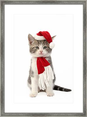 Santa Cat Framed Print by Greg Cuddiford