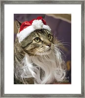 Santa Cat Framed Print