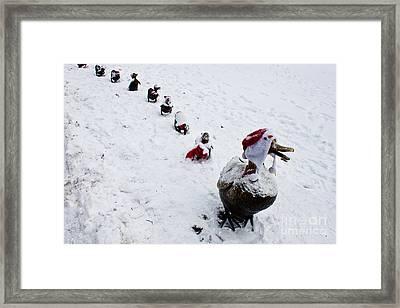 Santa Ducklings Framed Print by Thomas Marchessault
