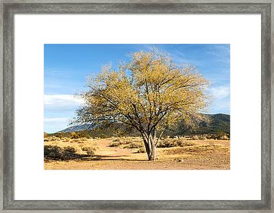 Santa Fe Cottonwood Framed Print