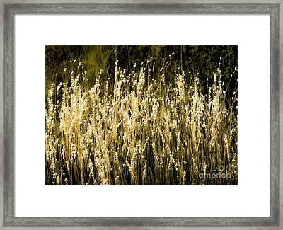 Santa Fe Grasses Framed Print