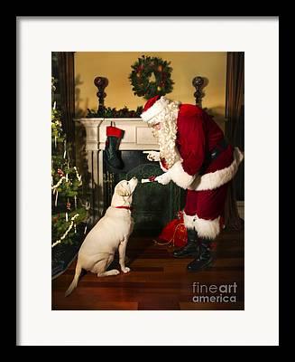 Attentive Labrador Dog Framed Prints