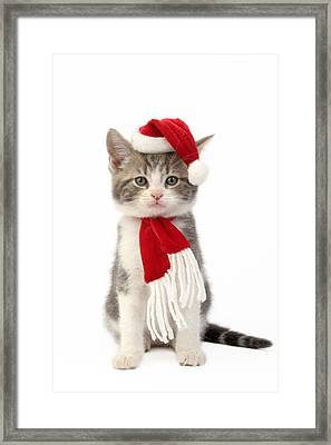 Santa Kitten Framed Print