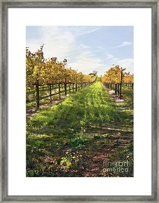 Santa Maria Vineyard Framed Print by Sharon Foster