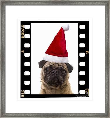 Santa Pug - Canine Christmas Framed Print by Edward Fielding