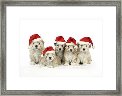 Santa Puppy Dogs Framed Print