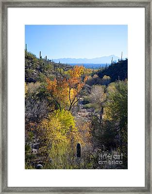 Santa Ritas From Sabino Canyon Framed Print