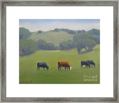 Santa Ynez Cows Framed Print by Jennifer Boswell