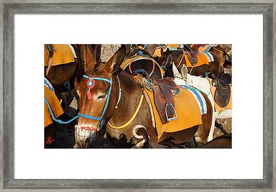 Santorini Donkeys Ready For Work Framed Print