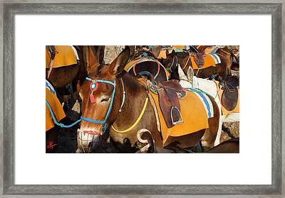 Santorini Donkeys Ready For Work Framed Print by Colette V Hera  Guggenheim