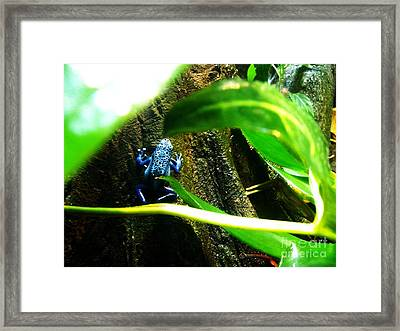 Framed Print featuring the photograph Sapo by Vanessa Palomino