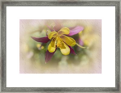 Sarah Framed Print by Elaine Teague