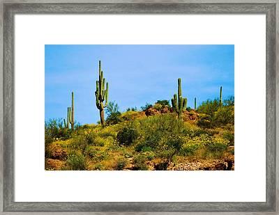Sargaro Cactus And Flowers Framed Print by Richard Jenkins