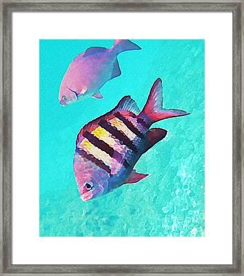 Sargeant Fish Framed Print