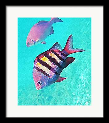 Fish On A Reef Framed Prints