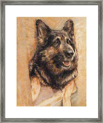 Sasha German Shepherd Framed Print
