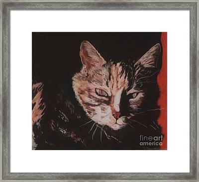 Sasha Framed Print by Pat Saunders-White