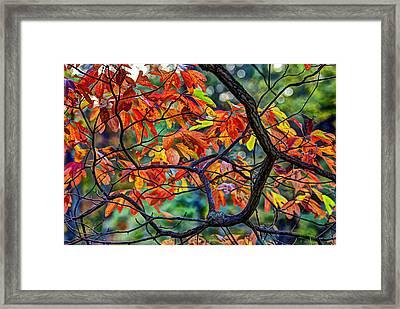 Sassafras Leaves Framed Print by Skip Tribby