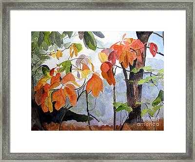 Sassafras Trees On The Ridge Framed Print