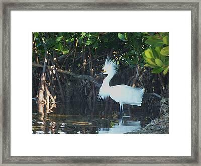Sassy Snowy Egret Framed Print