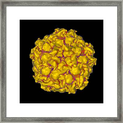 Satellite Panicum Mosaic Virus Framed Print