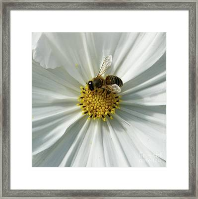 Framed Print featuring the photograph Satin Sheets by Linda Shafer