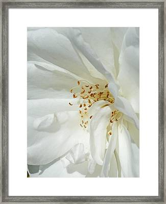 Satin Sheets Framed Print by Steve Taylor