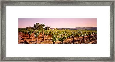 Sattui Winery, Napa Valley, California Framed Print