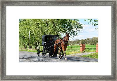 Saturday Buggy Ride Framed Print by Cathy Shiflett