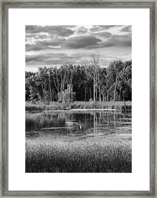 Saturday Meditation Framed Print
