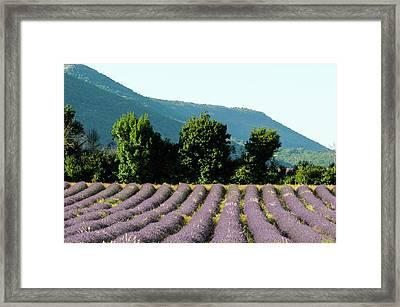 Sault, Provence, France Framed Print by Sergio Pitamitz