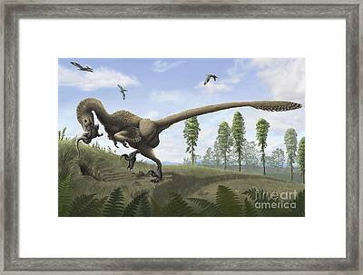 Saurornitholestes Seeks Prey In Burrows Framed Print by Emily Willoughby