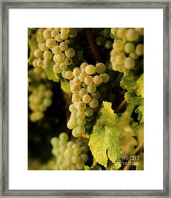 Sauvignon Blanc Cluster Framed Print by Craig Lovell