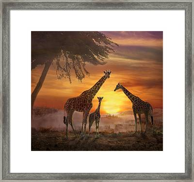 Savanna Sunset Framed Print