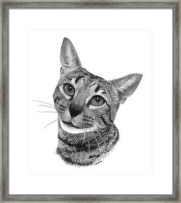 Savannah Cat Framed Print
