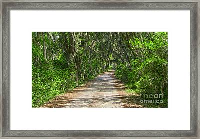 Savannah Country Road Framed Print by D Wallace