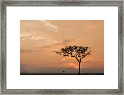 Framed Print featuring the photograph Savannah Dawn by Phyllis Peterson
